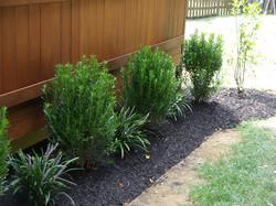 plantings008lg.jpg