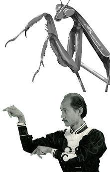 pics-of-praying-mantis.jpg