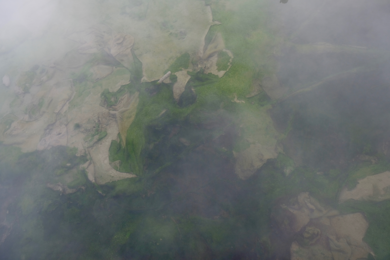 Rotorua Geothermal Landscape