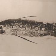 monotipia de peixe