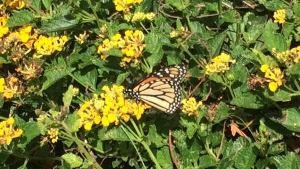 Butterfly Travels: Life Without Movement