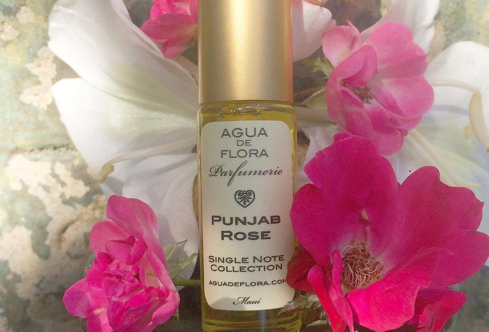 Punjab Rose