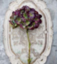 Hydrangea-Resize.jpg
