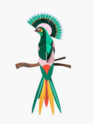 Oiseau 3D à construire - Oiseau gili