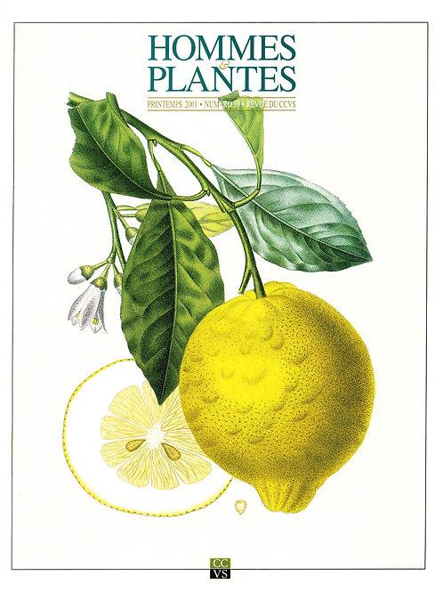 Hommes & Plantes n°37