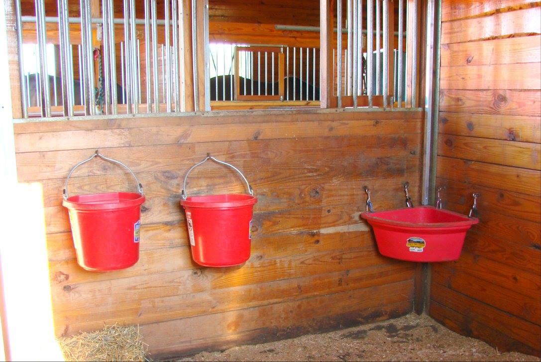 large 12x12 matted stalls, with 2 water buckets, and 2 windows.