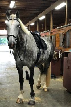 Mercy ready to ride!