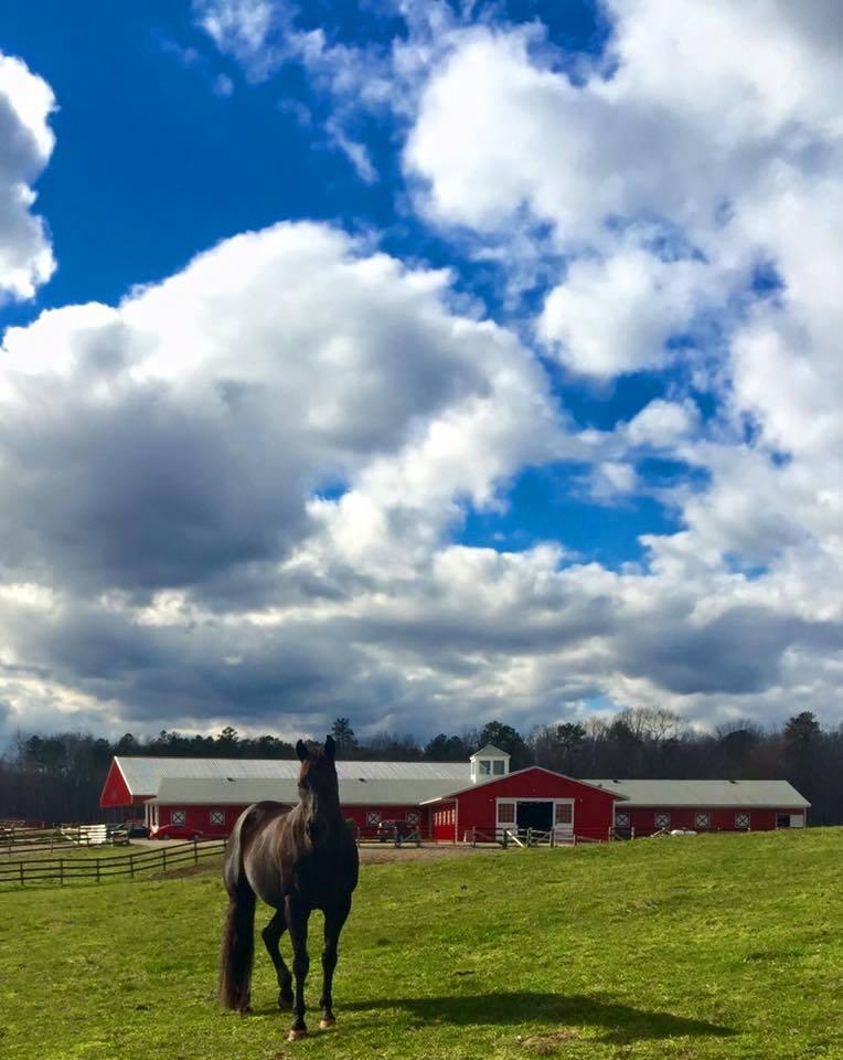 Luke, Debs quarter horse.