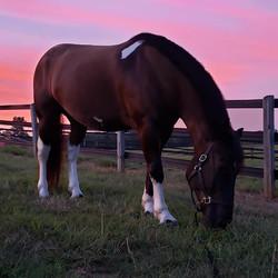 Reagan enjoying the sunset