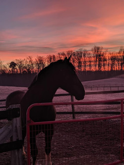 Royal and the sunrise