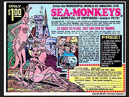 Sea Monkeys vs. Bees