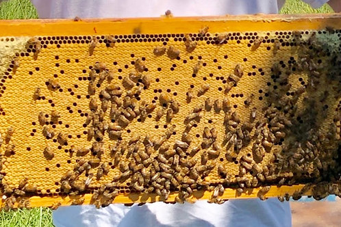 2021 Brood Frame (varying density from image)