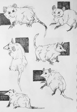 Studies of Possum