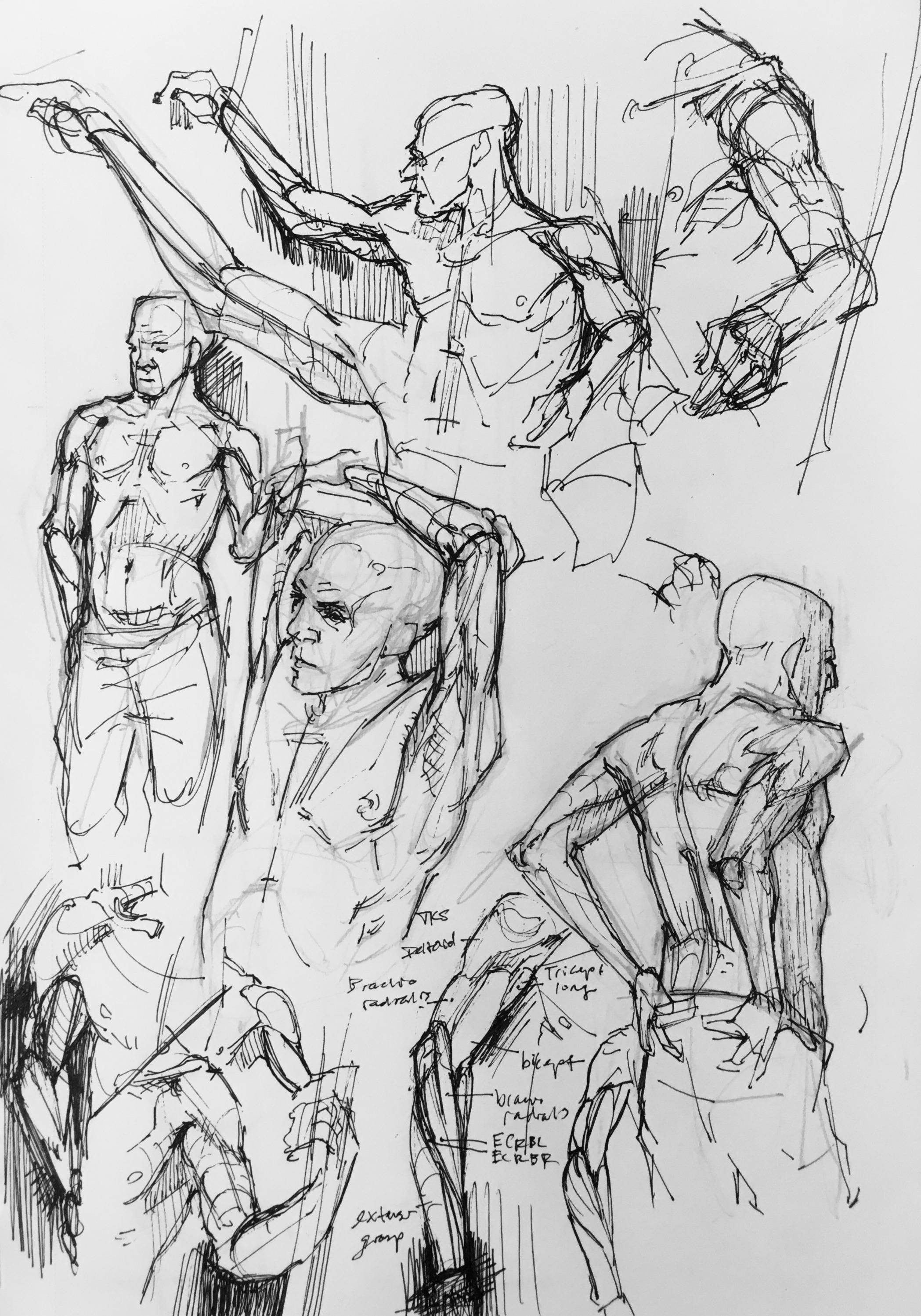 Male Arm and Torso Study
