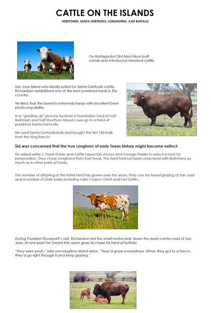 Cattle on the island 27x40.jpg