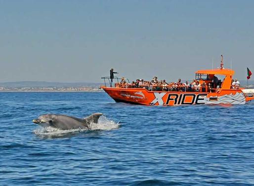 Boottochten Algarve & wilde dolfijnen spotten