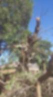 greengiant@webafrica.org.za