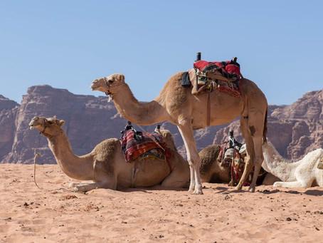 Mulheres do deserto