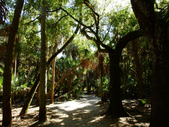 Florida Canopy @2017 Interactive Explorers, LLC.  All RIghts Reserved.