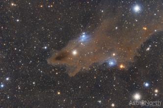Shark Nebula