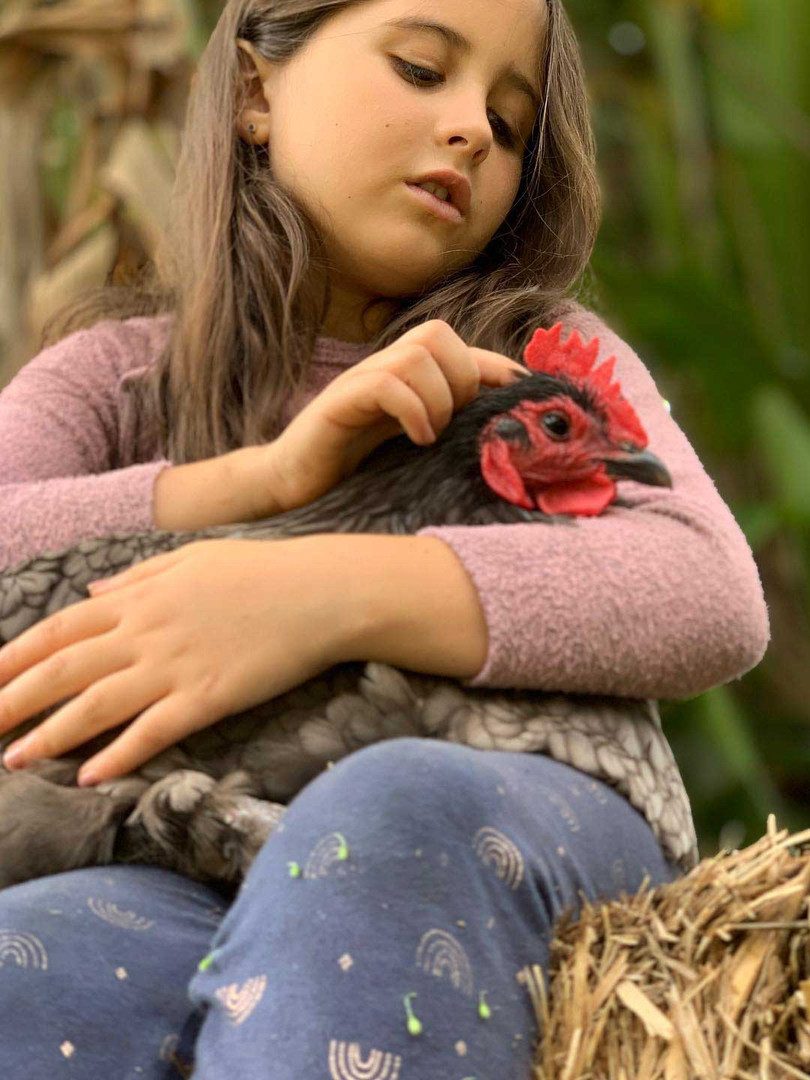 Young girl holds chicken