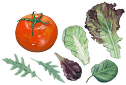 Tomato and Lettuce.jpg