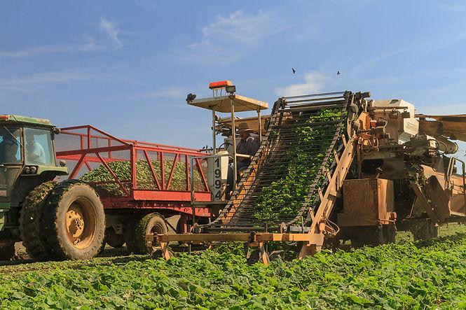 cucumberharvest1200.jpg