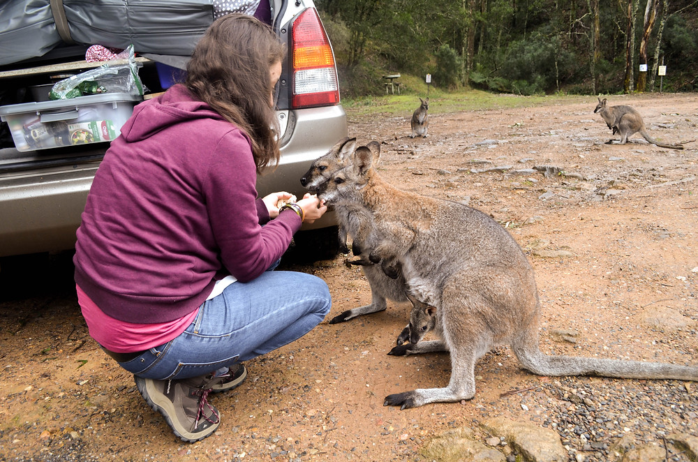 Closer to the wallabies than we probably should be; but they were so cute!