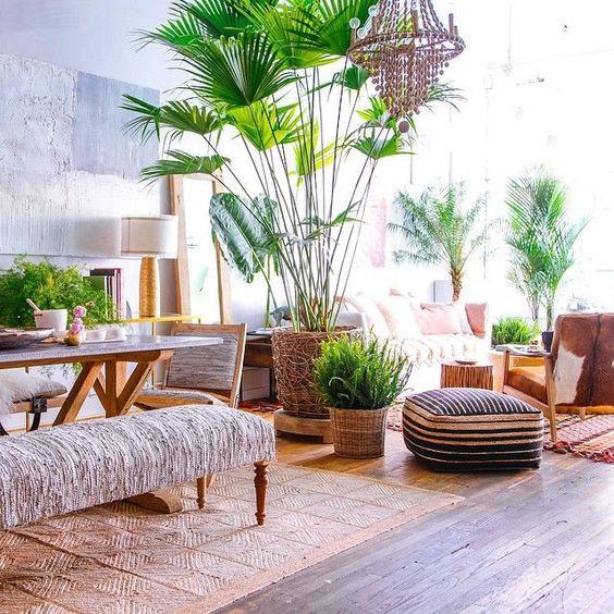 indoor plants interior design φυτά εσωτερικού χώρου διακόσμηση