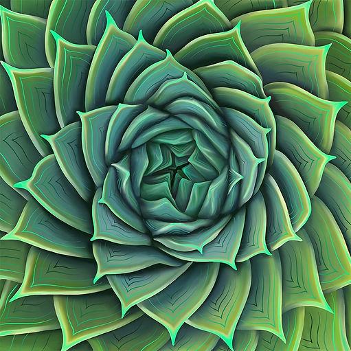 mediumsucculent.jpg