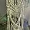 Thumbnail: Inner Fire Plant Hanger
