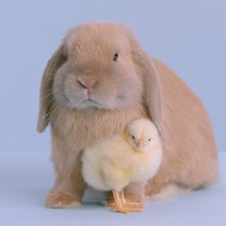 Stork - Chick Vs Bunny