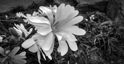 Spring flower 2015