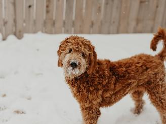 Зошто кучињата од стационари се најдобри?