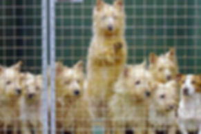 puppy-farm-article-111614022.jpg