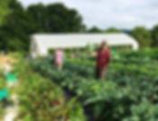 farmers2.jpg