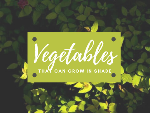 What Vegetables Will Grow in Shade?