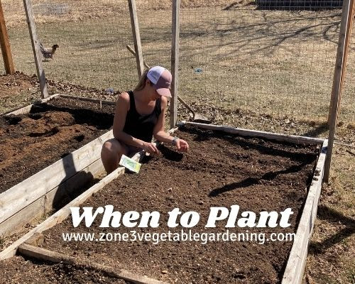 When to plant vegetables in Calgary in your backyard raised bed or in ground garden in zone 3 Edmonton Alberta Canada.