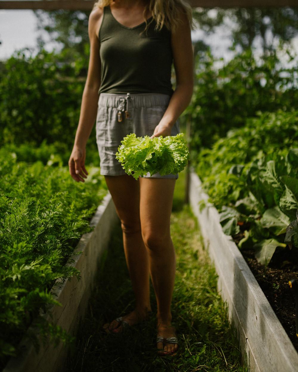 A girl in her backyard raised bed vegetable garden with garden lettuce growing in the background, holding freshly harvested garden lettuce, grown in gardening zone 3 of Alberta, Canada.