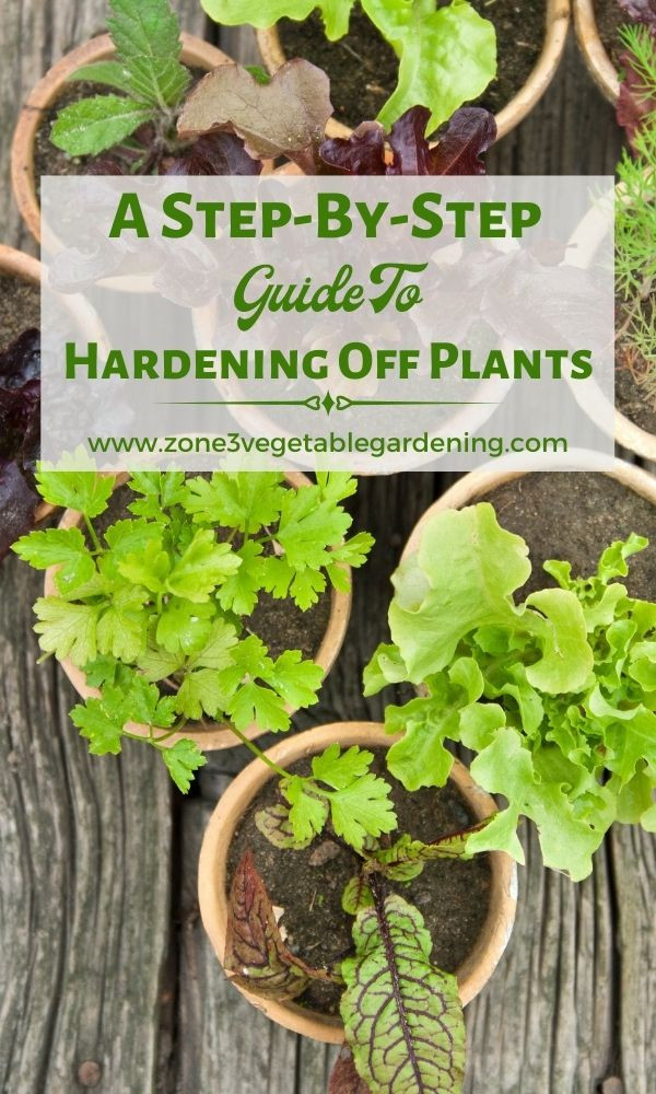 How to harden off plants and seedlings in a week.