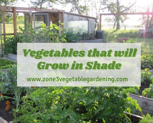 What vegetables will grow in shade depends partly on the hours of sunlight your backyard zone 3 vegetable garden receives.   Check out this list for what vegetables to plant in shade.