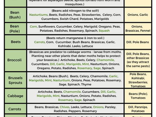 Free Printable Companion Planting Guide!