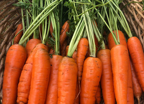 The Secret to Growing Carrots in Zone 3
