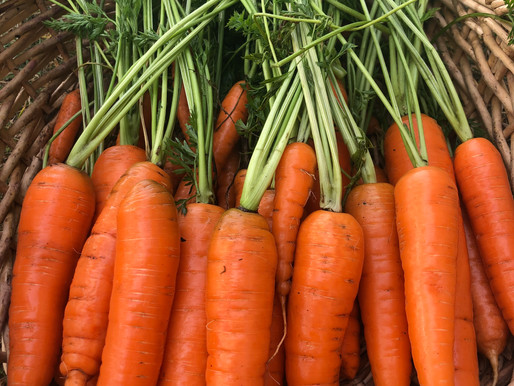 The Secret to Growing Better Carrots