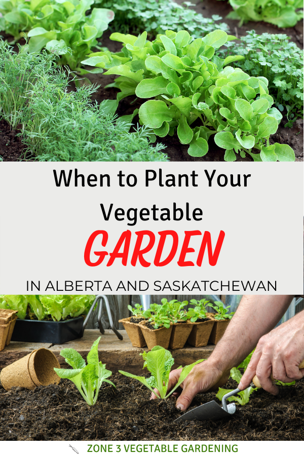 Dates on when to plant vegetables in Calgary gardens or any  zone 3 Alberta or Saskatchewan, Canada.