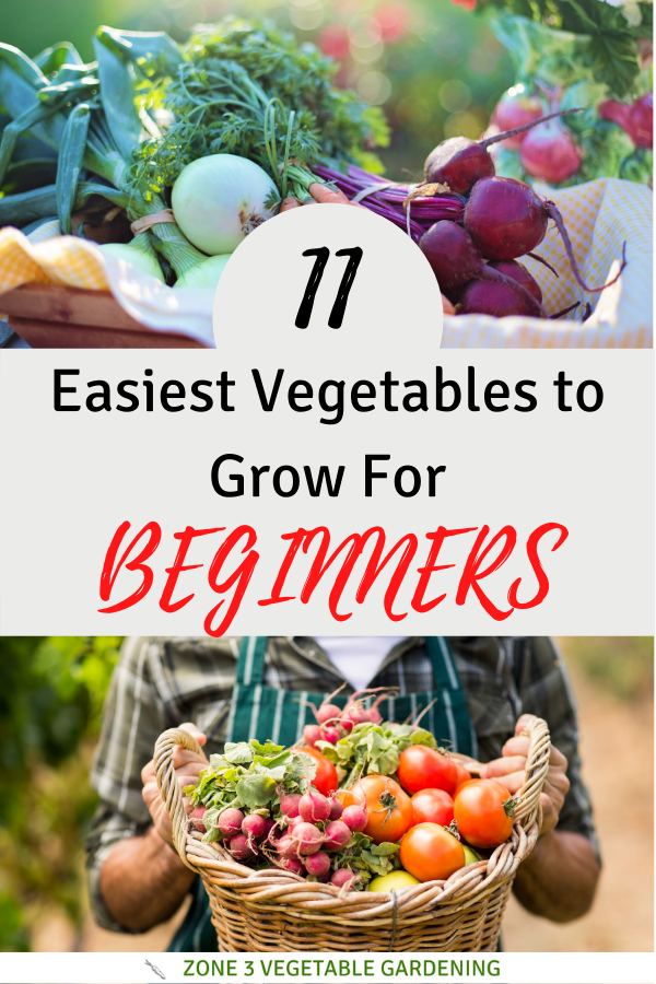 11 Easy Vegetables to grow in containers or your backyard vegetable garden in zone 3 Alberta, Canada.