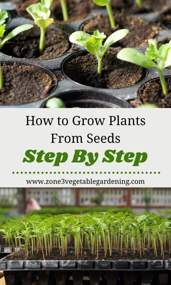 Tips for how to grow plants from sees step by step indoors.