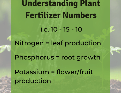 How to Choose the Best Plant Fertilizer