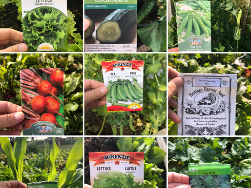 Where to Buy Vegetable Seeds in Canada