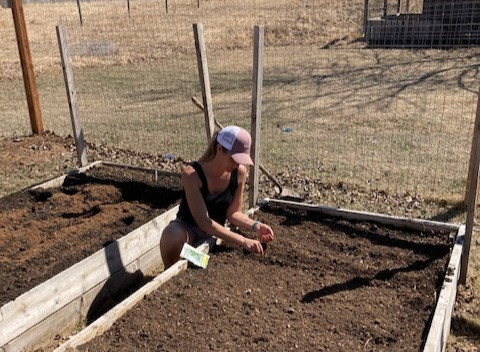 Preparing soil for planting vegetables such as tomatoes and potatoes can be done by adding compost, peat moss, amending and tilling your soil.